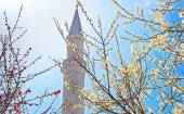 MInaret of the Hagia Sophia and blooming trees in the spring, Istanbul, Turkey — Stock Photo
