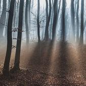 Dark dreamy forest with fog — Stock Photo