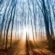 Beautiful morning scene in the forest with sun rays and long shadows — Stock Photo #56575721