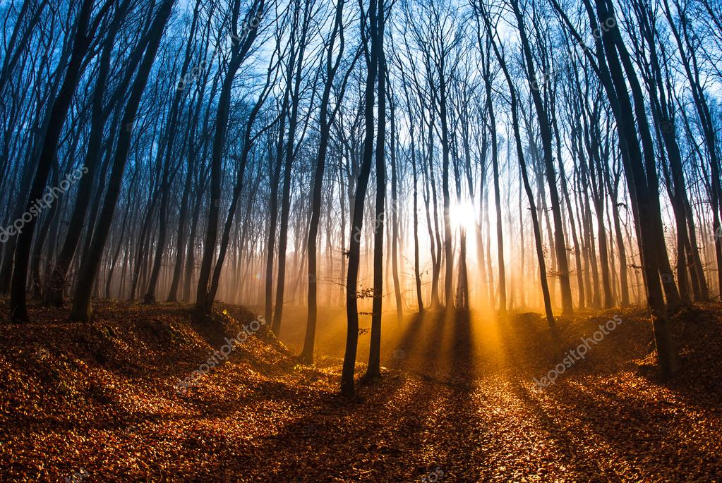 Фотообои Beautiful morning scene in the forest with sun rays and long shadows