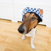 Cute dog wearing hat — Stock Photo