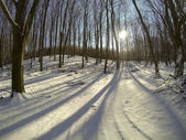 Sunset in the wood between the trees strains in winter period — Foto Stock