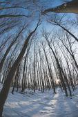 Winter landscape, wilde angle perspective — Foto Stock
