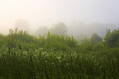Grass in the fog — Stock Photo