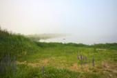 Fog on the Baltic Sea coast — Stock Photo