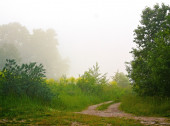 Rural road in the fog — Stock Photo