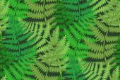 Seamless fern patterrn — Stock Photo