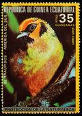 Equatorial Guinea   - CIRCA 1980: A stamp printed in Equatorial Guinea shows tropical bird - Tanager , circa 1980. — Stock Photo
