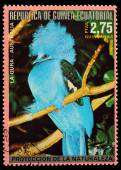Equatorial Guinea - CIRCA 1980: A stamp printed in Equatorial Guinea shows tropical bird - Western crowned pigeon, circa 1980. — Stock Photo