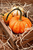 Decorative Pumpkins and Gourds — Stock Photo