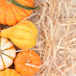 Autumn Gourd Still Life With Straw — Stock Photo #55339921