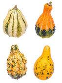 Four Gourds on White — Stock Photo