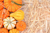 Ornamental Gourds WhiteTable Straw — Stock Photo