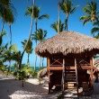 Exotic Beach in Dominican Republic, Punta Cana — Stock Photo #66184467