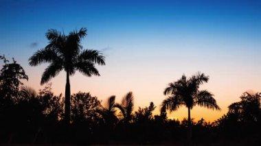 Palm tree silhoette on sunset — Stock Video