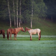 Horse in a field — Stock Photo #74645609