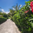 Beautiful alley in the park, caribbean resort with flowers and p — Stock Photo #74645143