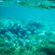 Underwater seabed reef background — Stock Photo #78979810