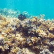 Underwater seabed reef background — Stock Photo #78981366