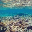 Underwater coral reef background in Caribbean sea — Stock Photo #80963834