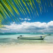 Exotic Beach in Dominican Republic, Punta Cana — Stock Photo #82049844