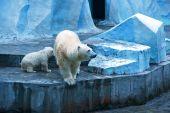 白色熊 — 图库照片