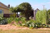 Suburban Garden — Stock Photo