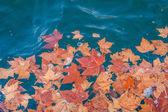 Höstlöv i vattnet — Stockfoto