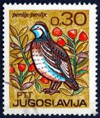 Postage stamp Yugoslavia 1967 Partridge, Bird — Stock Photo