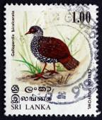 Postage stamp Sri Lanka 1979 Sri Lanka Spurfowl, Bird — Stock Photo