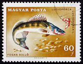 Postage stamp Hungary 1967 Pike Perch, Fish — Stock Photo