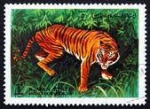 Postage stamp Ajman 1972 Tiger, Pantera Tigris, Animal — Stock Photo