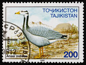 Postage stamp Tajikistan 1996 Bar-headed Goose, Bird — Stock Photo