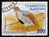 Postage stamp Tajikistan 1996 Daurian Partridge, Gamebird — Stock Photo