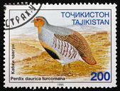 Postage stamp Tajikistan 1996 Daurian Partridge, Gamebird — Stock Photo