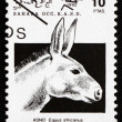 Postage stamp Sahara 1992 African Wild Donkey — Stock Photo #53187343