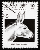 Postage stamp Sahara 1992 African Wild Donkey — Stock Photo