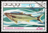Postage stamp Sahara 1991 Grey Mullet, Liza — Stock Photo