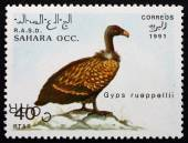 Postage stamp Sahara 1991 Ruppells Vulture, Bird — Stock Photo