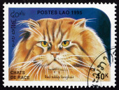 Postage stamp Laos 1995 Red Tabby Longhair, Domestic Cat — Stock Photo