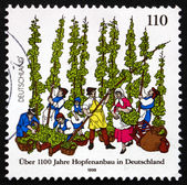 Postage stamp Germany 1998 German Cultivation of Hops — Stock Photo