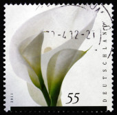 Postage stamp Germany 2011 Flower, Mourning — Stock Photo