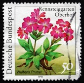 Postage stamp Germany 1991 Wulfens Primel, Herbaceous Plant — Stock Photo