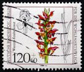 Postage stamp Germany 1984 Anacamptis Coriophora, Orchid — Stock Photo