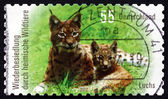 Postage stamp Germany 2012 Northern Lynx, Animal — Foto de Stock