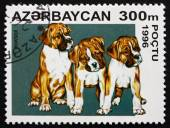 Postage stamp Azerbaijan 1996 Boxer, Breed of the Dog — Stock Photo