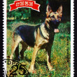 Postage stamp North Korea 1989 German Shepherd — Stock Photo #54830461