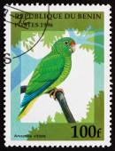 Postage stamp Benin 1996 Puerto Rican Amazon, Bird — Stock Photo