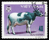 Postage stamp Vietnam 1979 Cow, Domestic Animal — Stock Photo