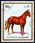 Postage stamp Fujeira 1972 Horse, Domestic Animal — Stock Photo